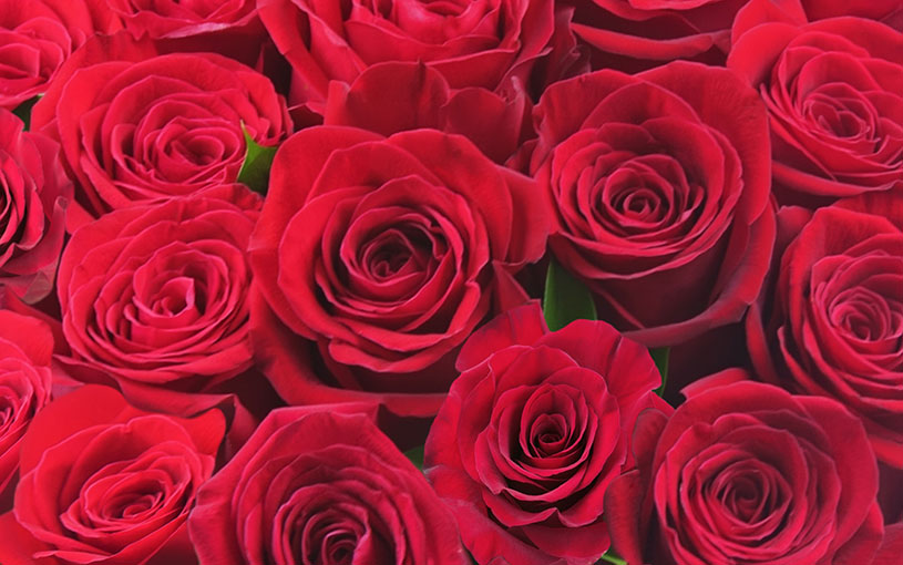 Shop Roses and Rose Bouquets