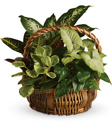 Emerald Garden Basket from Weidig's Floral in Chardon, OH