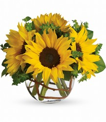 Sunny Sunflowers from Weidig's Floral in Chardon, OH